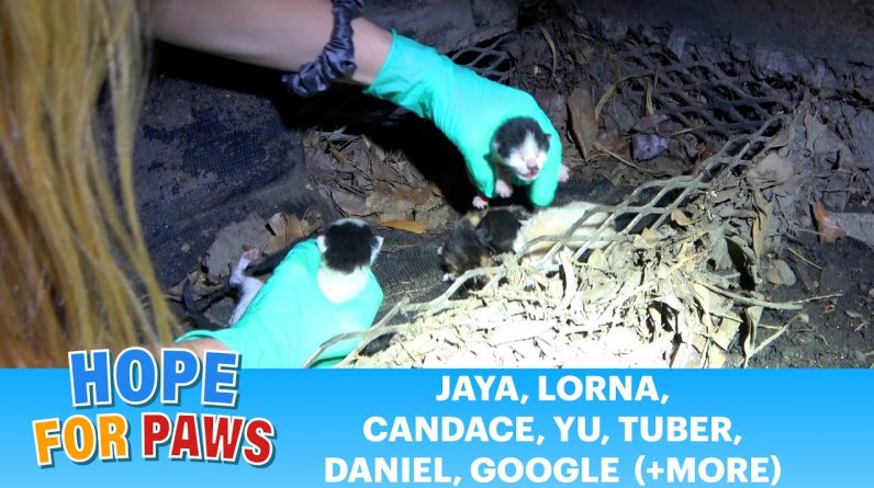 Kittens almost got killed - it took 120 hours to complete this rescue! 🙀