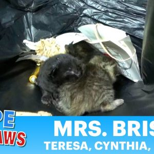 A family was born in a trash can and was almost thrown away!!!