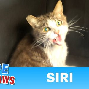 Feral cat got hit by a car on the freeway and was unable to run away!